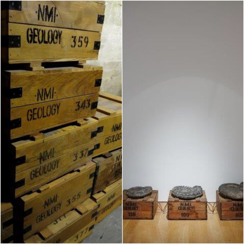Geology storage boxes in the Natural History Museum  storage facility and used as 'plinths' for three Ammonite's in Trove Photography: Dorothy Cross and Denis Mortell Photography